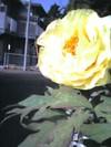 2006_04_30_hana